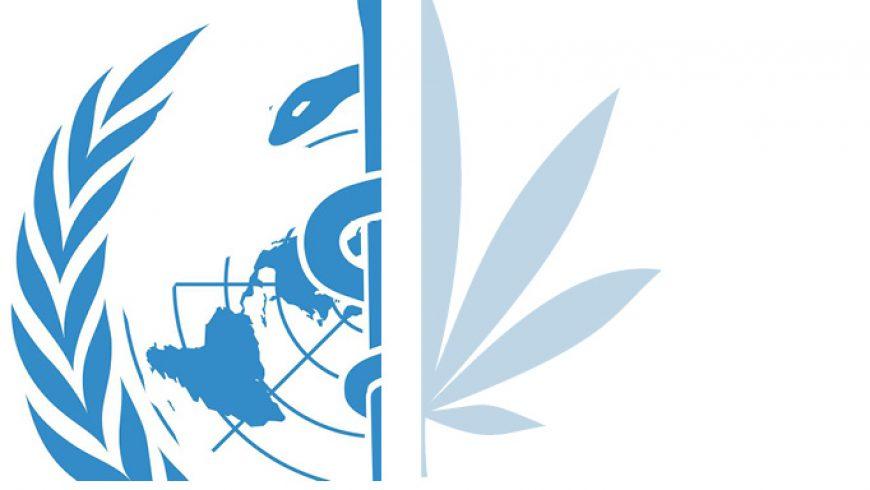 WHO bewertet Cannabis Neu