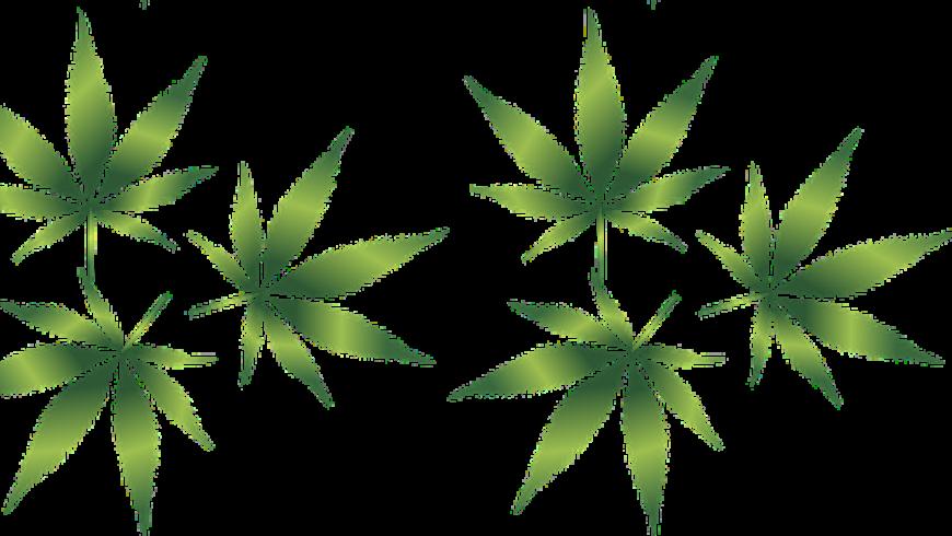Jugendstrafrichter fordert Legalisierung von Cannabis